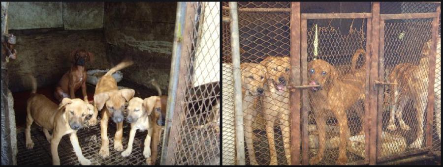 Photo:  Nara Dog Farm  in Miryang, Korea.  http://map.naver.com/local/siteview.nhn?code=12059229