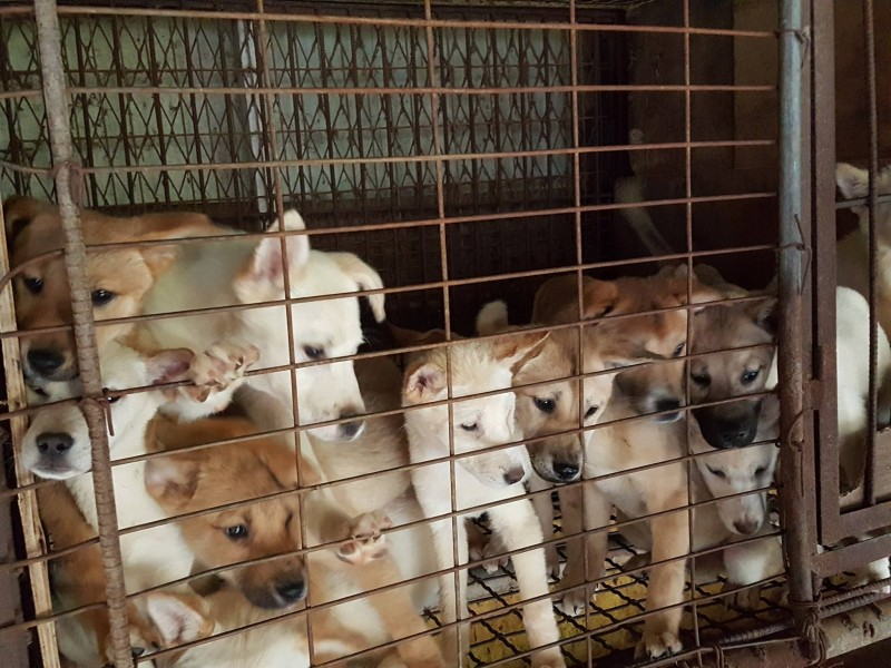 Bucheon 300 dogs dog farm rescue_0516 (12)