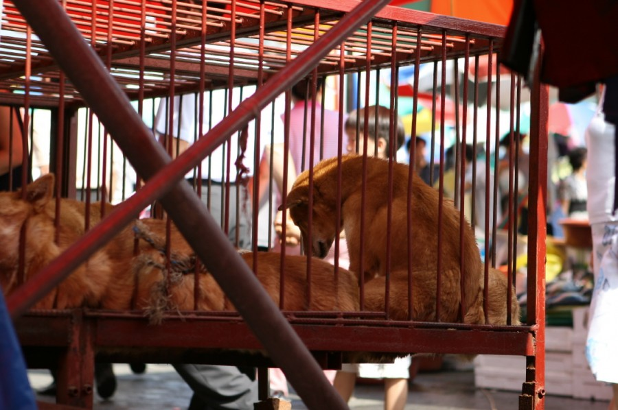 Seongnam Moran Market, South Korea.  Children are exposed to horrendous cruelty and indifference of companion animal consumption.