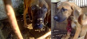 "Photo: The Korea Observer's documentary ""The Dog Meat Professional: South Korea"" (https://koreandogs.org/dmp/)"