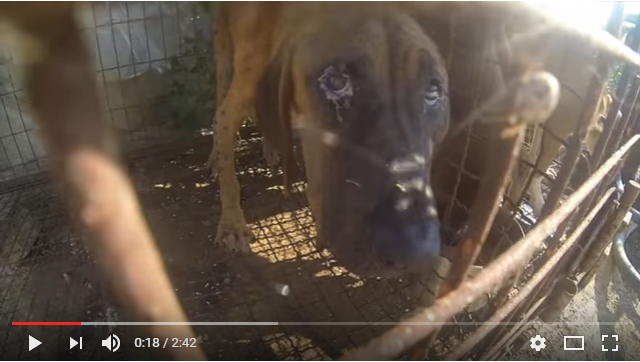 The Dog Meat Professionals - South Korea_1