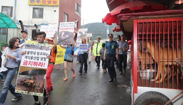 Photo:  Busan.com.  Animal activists/organizations including Busan KAPCA, ADF, CARE held protest on August 22, 2017 at the Busan Gupo Market for the shut down of dog meat market.